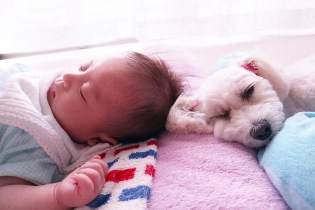 防災のおかげで乗り切った赤ちゃんが犬と寝ている様子