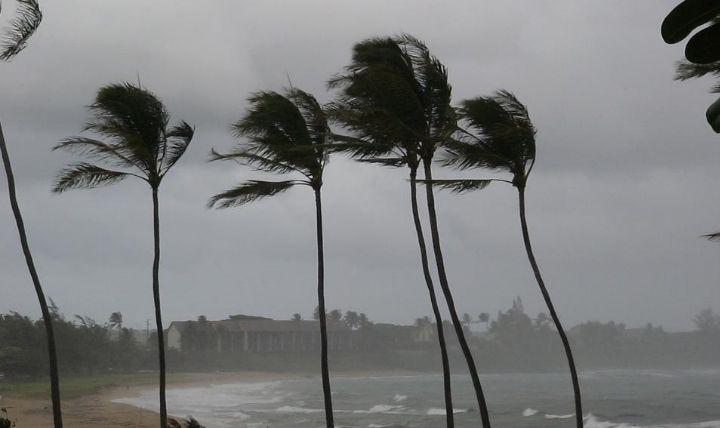 台風によりたなびく木々を見て家庭でできる対策を決意した画像